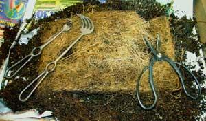 Удалённая часть корневого кома